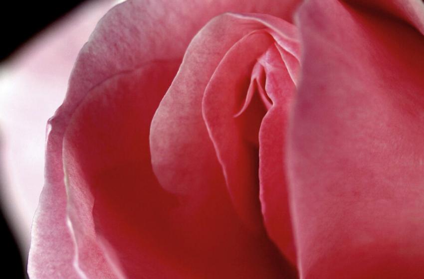 La previa del orgasmo femenino: ¿por qué es tan importante?